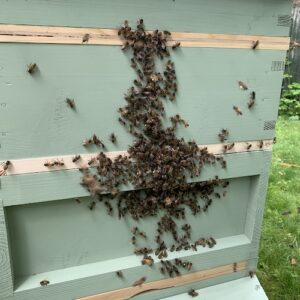Front of bee hive